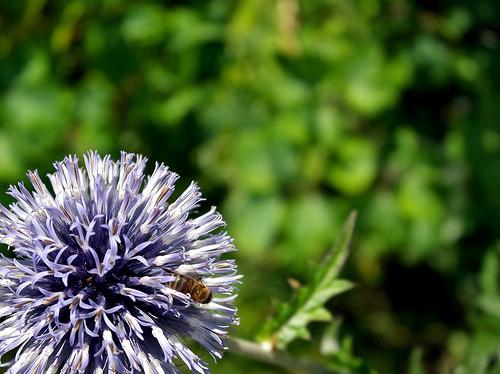 Bug On Round Purple Flower